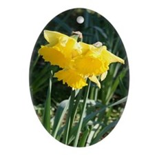 Oval Ornament - featuring daffodils