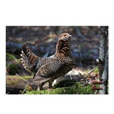 Female Spruce Grouse Postcards (Package of 8)