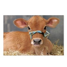 Cute Jersey Calf Postcards (Package of 8)