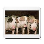 Jersey Pigs Mousepad