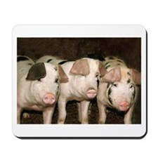 Jersey Pigs Mousepad