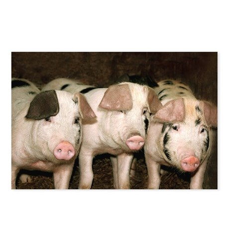 Jersey Pig Postcards (Package of 8)
