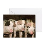 Jersey Pigs Greeting Card