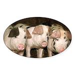 Jersey Pig Oval Sticker