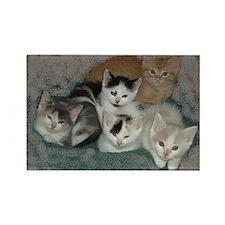 Kittens Rectangle Magnet