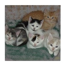 Kittens Tile Coaster