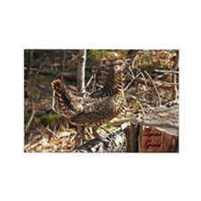 Strutting Spruce Grouse Rectangle Magnet