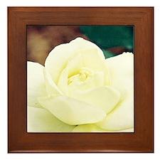 Rose - Framed Tile