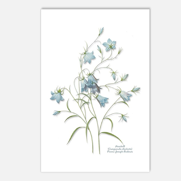 Harebells Postcards (Package of 8)