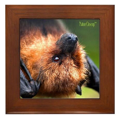 RODRIGUEZ FRUIT BAT Framed Tile