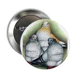 Chinese Owl Pigeons Button