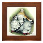 Chinese Owl Pigeons Framed Tile