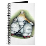 Chinese Owl Pigeons Journal