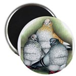 Chinese Owl Pigeons Magnet