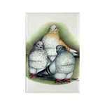 Chinese Owl Pigeons Rectangle Magnet (100 pack)