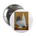 Indian Fantail Pigeon Button