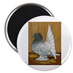 Indian Fantail Pigeon Magnet