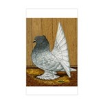 Indian Fantail Pigeon Rectangle Sticker