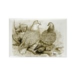 Frillback Pigeons Rectangle Magnet