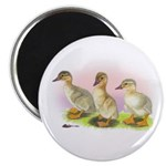 Buff Ducklings Magnet