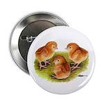 Red Leghorn Chicks Button