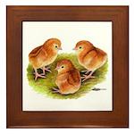 Red Leghorn Chicks Framed Tile