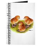 Red Leghorn Chicks Journal