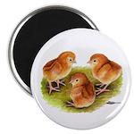 Red Leghorn Chicks Magnet
