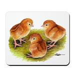 Red Leghorn Chicks Mousepad