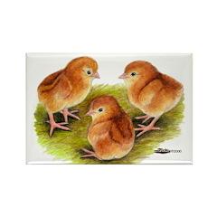 Red Leghorn Chicks Rectangle Magnet