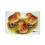Red Leghorn Chicks Rectangle Magnet (10 pack)