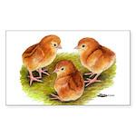 Red Leghorn Chicks Rectangle Sticker