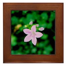 Wildflower - Framed Tile