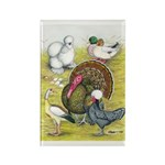 Assorted Poultry #3 Rectangle Magnet (10 pack)