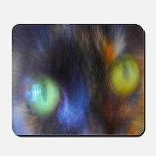 Cat Close-up!