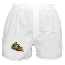 Monster Dozer Boxer Shorts