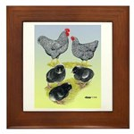 Plymouth Rock Rooster, Hen & Framed Tile