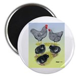 """Plymouth Rock Rooster, Hen & 2.25"""" Magnet"""