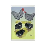 Plymouth Rock Rooster, Hen & Rectangle Magnet (10