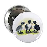 Swedish Duck Ducklings Button