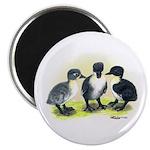 Swedish Duck Ducklings Magnet