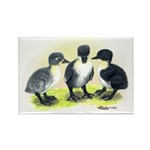 Swedish Duck Ducklings Rectangle Magnet (10 pack)