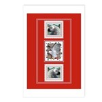 Parrots Postcards (Package of 8)