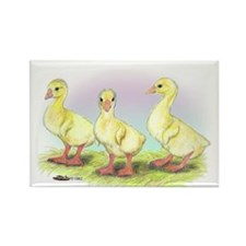 Chinese Geese Goslings Rectangle Magnet