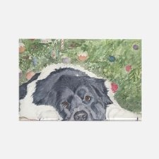 Landseer Newfoundland Rectangle Magnet