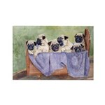 Pugs, Pug Rectangle Magnet