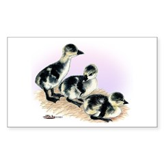 African Geese Goslings Rectangle Sticker