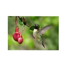 Black-chinned HB Rectangle Magnet