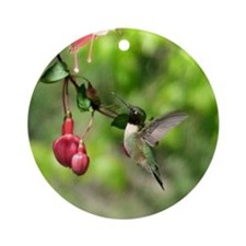 Black-chinned HB Ornament (Round)