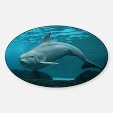 Damara the Dolphin Bumper Stickers